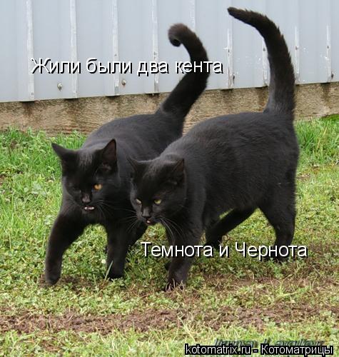 Котоматрица: Жили были два кента Темнота и Чернота