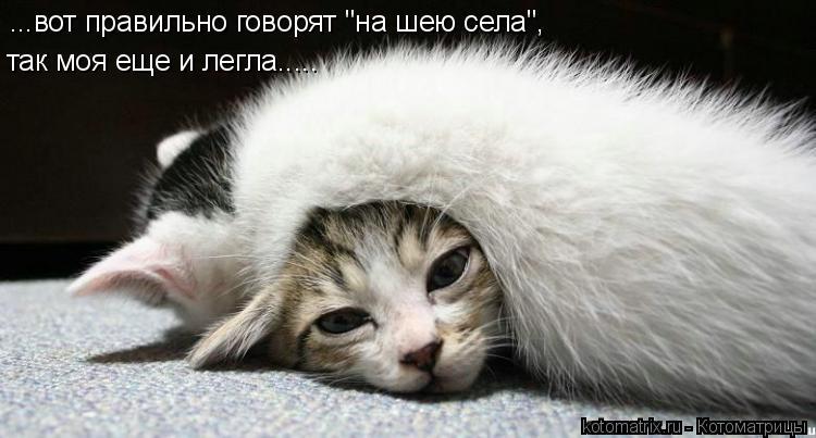 """Котоматрица: ...вот правильно говорят """"на шею села"""", так моя еще и легла....."""
