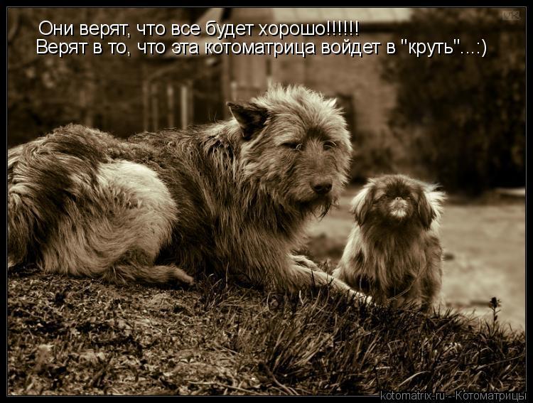 """Котоматрица: Они верят, что все будет хорошо!!!!!! Верят в то, что эта котоматрица войдет в """"круть""""...:)"""
