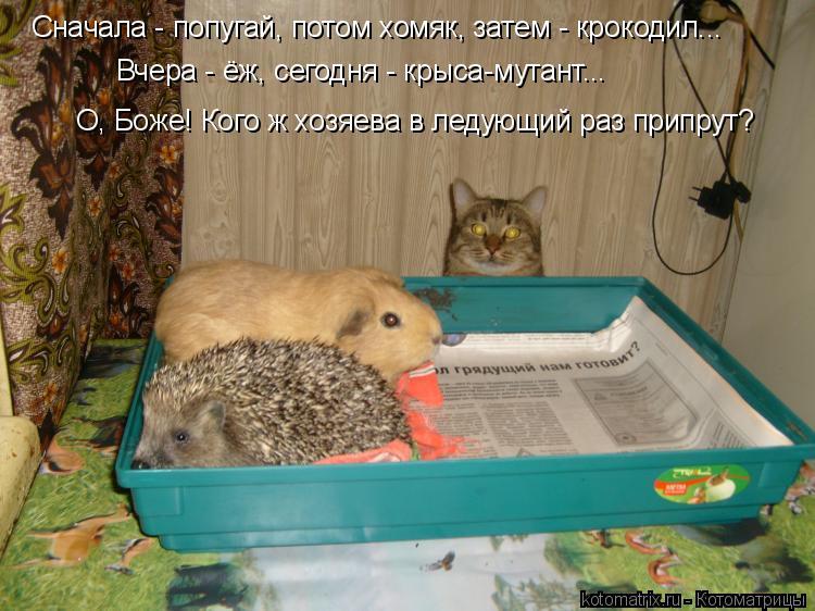 Котоматрица: О, Боже! Кого ж хозяева в ледующий раз припрут? Сначала - попугай, потом хомяк, затем - крокодил... Вчера - ёж, сегодня - крыса-мутант...