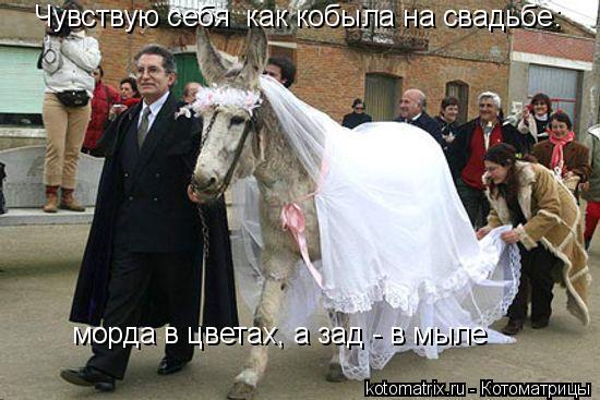 Котоматрица: Чувствую себя  как кобыла на свадьбе:  морда в цветах, а зад - в мыле