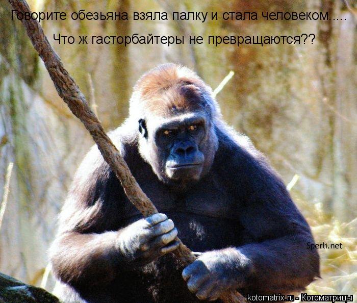 Котоматрица: Говорите обезьяна взяла палку и стала человеком..... Что ж гасторбайтеры не превращаются??