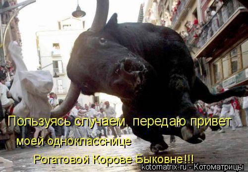 Котоматрица: Рогатовой Корове Быковне!!! Пользуясь случаем, передаю привет моей однокласснице