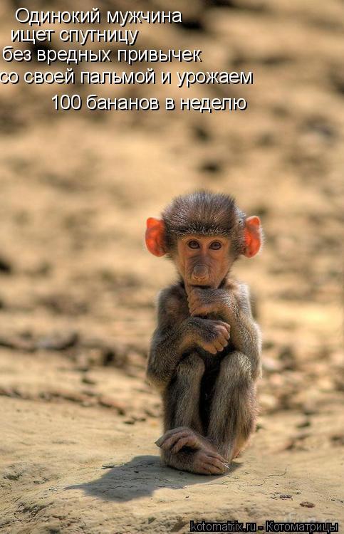 Котоматрица: Одинокий мужчина ищет спутницу без вредных привычек со своей пальмой и урожаем  100 бананов в неделю