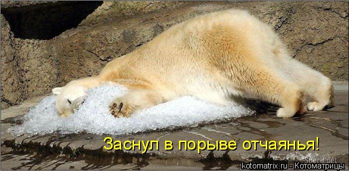 Котоматрица: Заснул в порыве отчаянья!