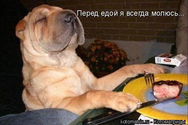 Котоматрица: Перед едой я всегда молюсь...