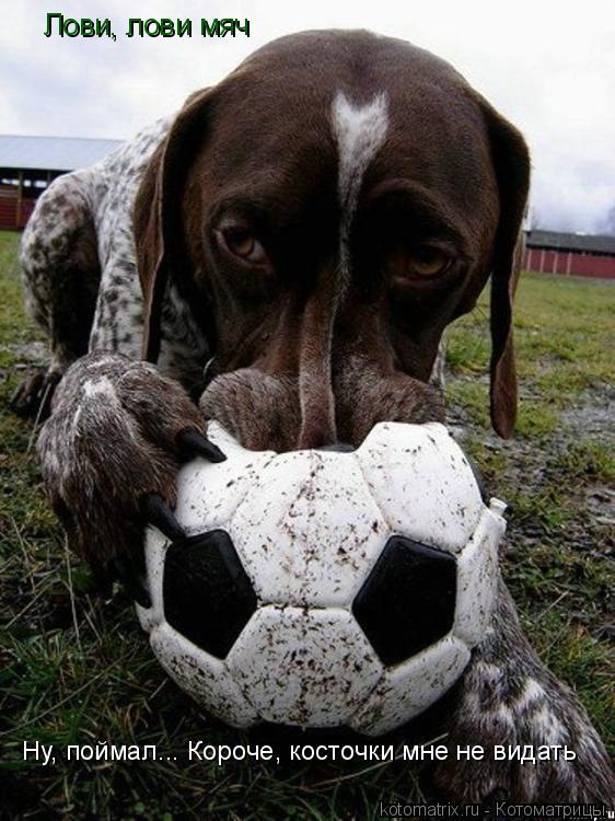 Котоматрица: Лови, лови мяч Ну, поймал... Короче, косточки мне не видать