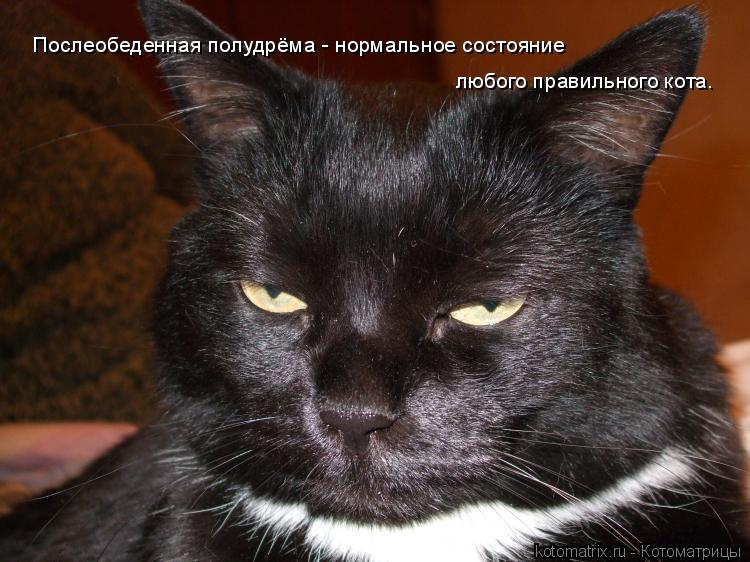 Котоматрица: Послеобеденная полудрёма - нормальное состояние   любого правильного кота.