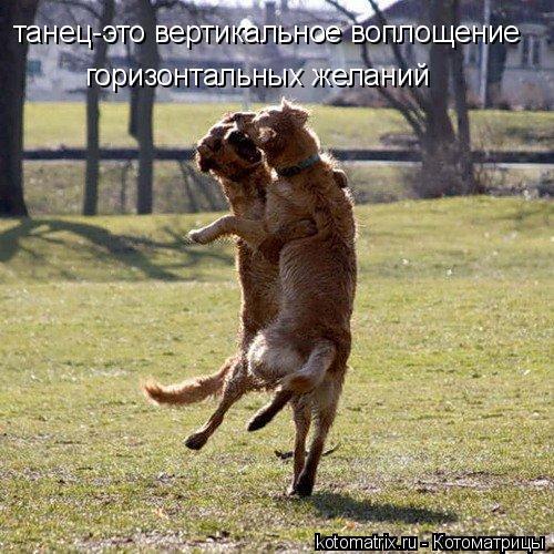 Котоматрица: танец-это вертикальное воплощение горизонтальных желаний