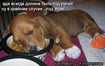 Котоматрица: еда всегда должна быть под рукой! ну в крайнем случае...под ухом!