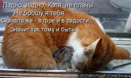 Котоматрица: Ладно, ладно, Котя, не плачь! Не брошу я тебя. Сказала же - в горе и в радости... Значит так тому и быть.