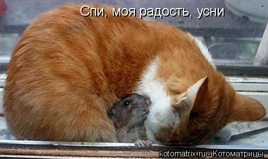 Котоматрица: Спи, моя радость, усни