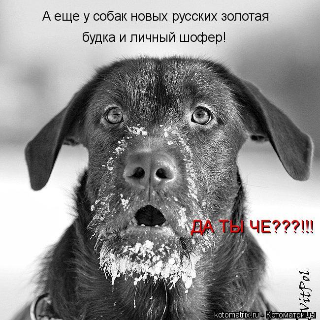 Котоматрица: А еще у собак новых русских золотая будка и личный шофер! ДА ТЫ ЧЕ???!!!