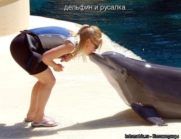 Котоматрица: дельфин и русалка....