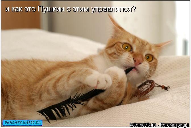 Котоматрица: и как это Пушкин с этим управлялся?