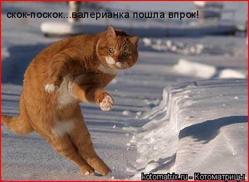 Котоматрица: скок-поскок...валерианка пошла впрок!