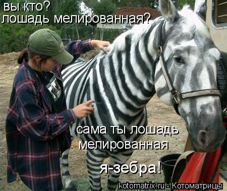 Котоматрица: вы кто?  лошадь мелированная?  сама ты лошадь  мелированная  я-зебра!
