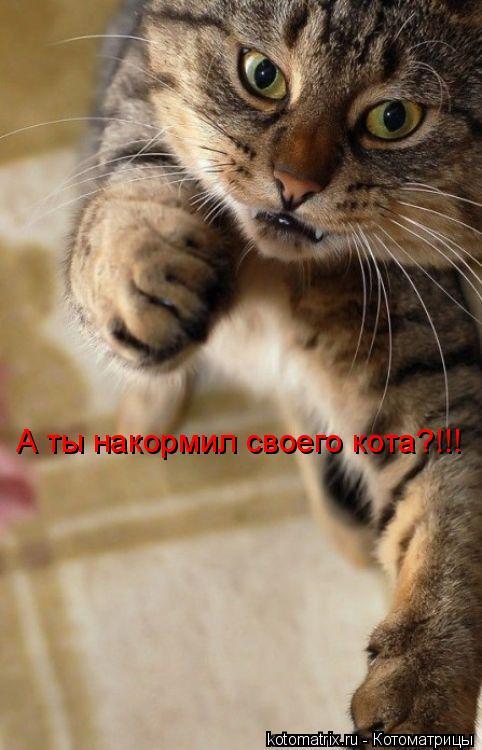 Котоматрица: А ты накормил своего кота?!!!