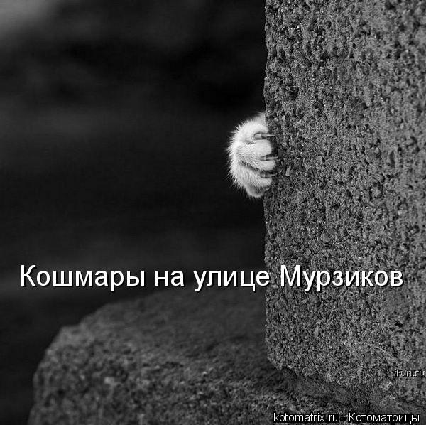 Котоматрица: Кошмары на улице Мурзиков