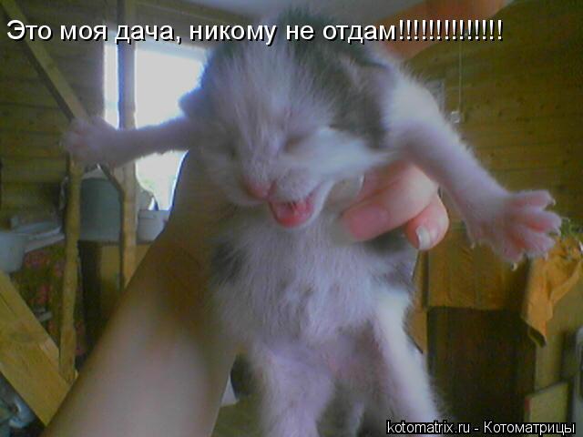 Котоматрица: Это моя дача, никому не отдам!!!!!!!!!!!!!!