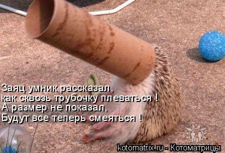 Котоматрица: Заяц умник рассказал, как сквозь трубочку плеваться ! А размер не показал, Будут все теперь смеяться !