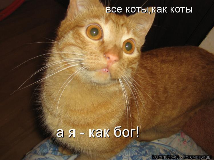 Котоматрица: все коты,как коты а я - как бог!