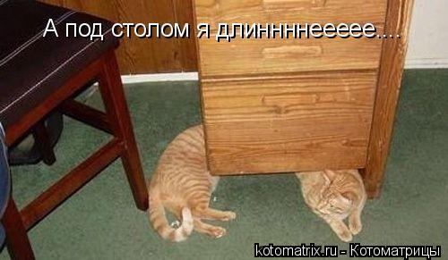 Котоматрица: А под столом я длиннннеееее....