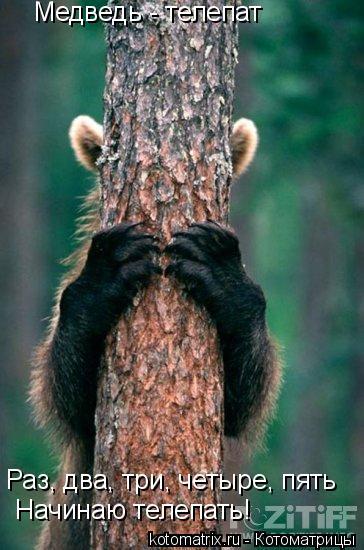 Котоматрица: Медведь - телепат Раз, два, три, четыре, пять Начинаю телепать!