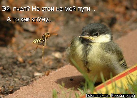 Котоматрица: Эй, пчел? Нэ стой на мой пути... А то как клУну...