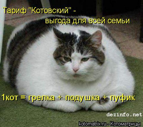 """Котоматрица: 1кот = грелка + подушка + пуфик Тариф """"Котовский"""" -  выгода для всей семьи"""