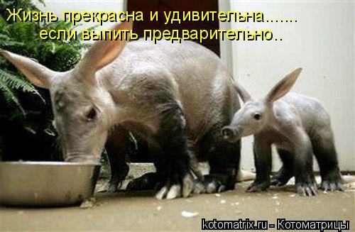 Котоматрица: Жизнь прекрасна и удивительна....... если выпить предварительно..