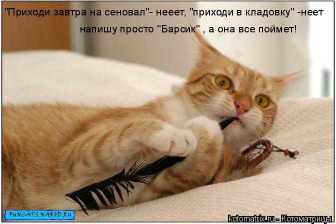 """Котоматрица: """"Приходи завтра на сеновал""""- нееет, """"приходи в кладовку"""" -неет напишу просто """"Барсик"""" , а она все поймет!"""
