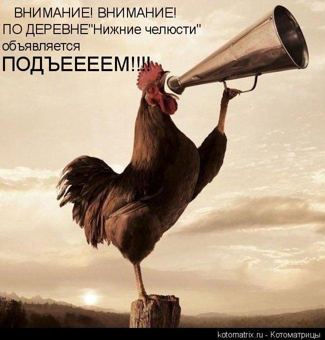 """Котоматрица: ВНИМАНИЕ! ВНИМАНИЕ! ПО ДЕРЕВНЕ""""Нижние челюсти"""" объявляется  ПОДЪЕЕЕЕМ!!!!"""