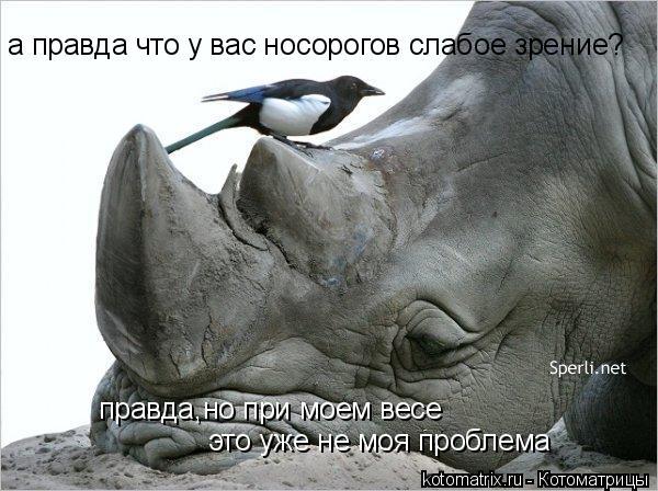 Котоматрица: а правда что у вас носорогов слабое зрение? правда,но при моем весе это уже не моя проблема