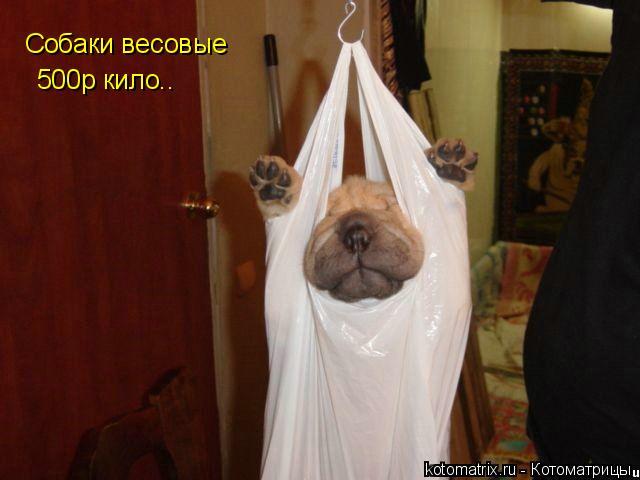 Котоматрица: Собаки весовые Собаки весовые 500р кило..