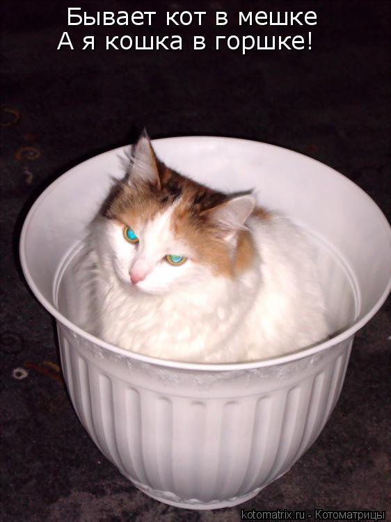 Котоматрица: Бывает кот в мешке А я кошка в горшке!