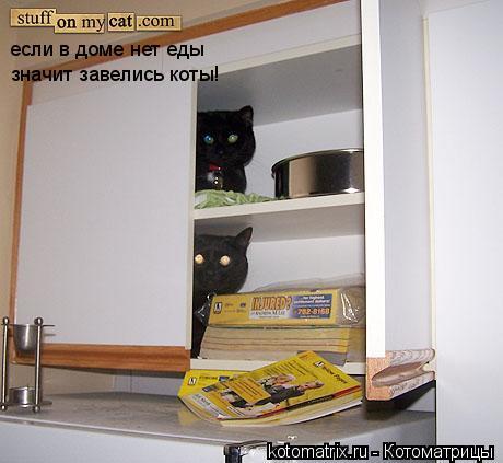 Котоматрица: если в доме нет еды значит завелись коты!