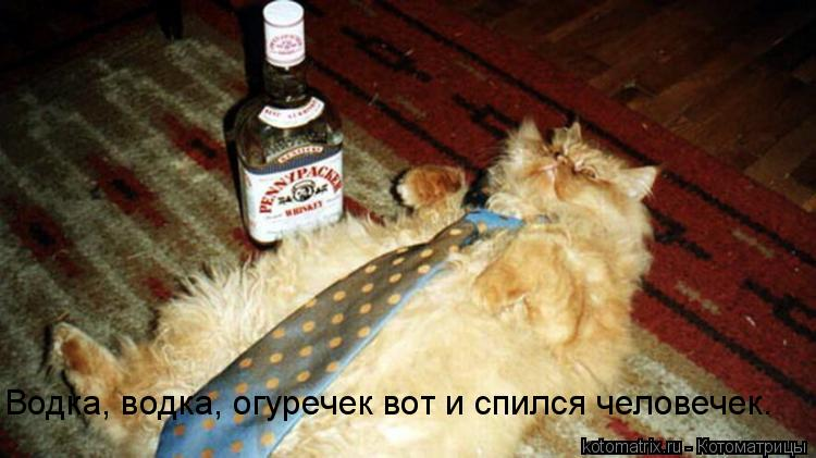 Котоматрица: Водка, водка, огуречек вот и спился человечек.