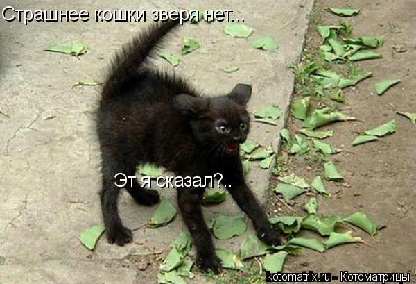 Котоматрица: Страшнее кошки зверя нет... Эт я сказал?..