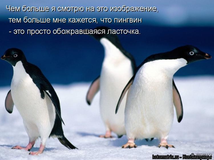 Котоматрица: Чем больше я смотрю на это изображение, тем больше мне кажется, что пингвин - это просто обожравшаяся ласточка.