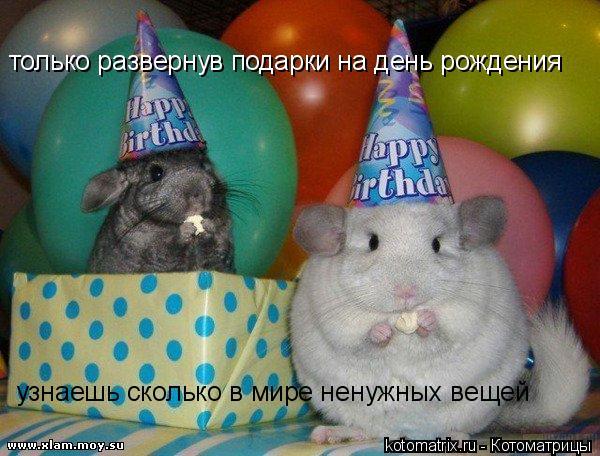 Котоматрица: только развернув подарки на день рождения узнаешь сколько в мире ненужных вещей