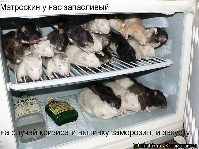 Котоматрица: Матроскин у нас запасливый- на случай кризиса и выпивку заморозил, и закуску...