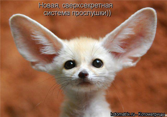 Котоматрица: Новая, сверхсекретная система прослушки))