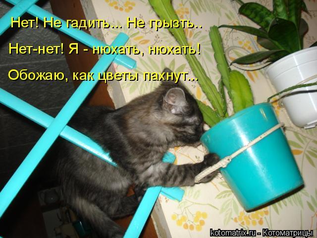 Котоматрица: Нет! Не гадить... Не грызть..  Нет-нет! Я - нюхать, нюхать! Обожаю, как цветы пахнут...