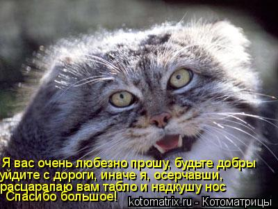 Котоматрица: Я вас очень любезно прошу, будьте добры уйдите с дороги, иначе я, осерчавши,  расцарапаю вам табло и надкушу нос Спасибо большое!