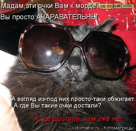 Котоматрица: Вы просто АЧАРАВАТЕЛЬНЫ.. Мадам,эти очки Вам к морде... А взгляд из-под них просто-таки обжигает... А где Вы такие очки достали? А, де достала, та