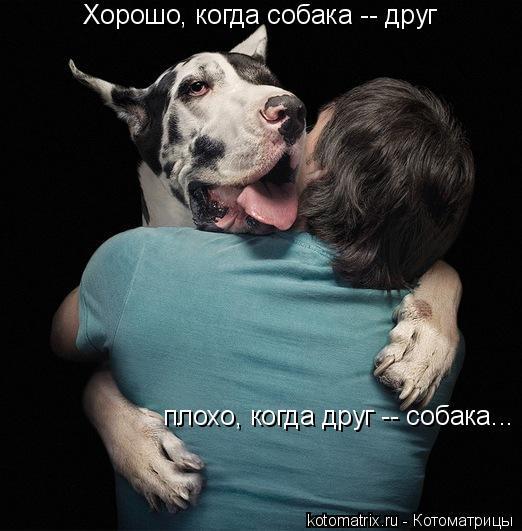 Котоматрица: Хорошо, когда собака -- друг плохо, когда друг -- собака...