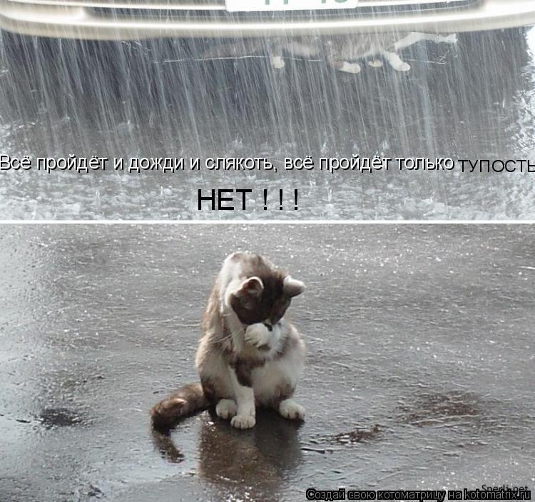 Котоматрица: Всё пройдёт и дожди и слякоть, всё пройдёт только ТУПОСТЬ НЕТ ! ! !