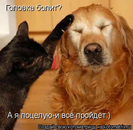 Котоматрица: Головка болит? А я поцелую-и всё пройдёт:)
