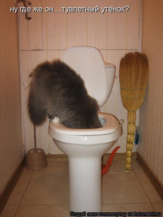Котоматрица: ну где же он....туалетный утёнок?